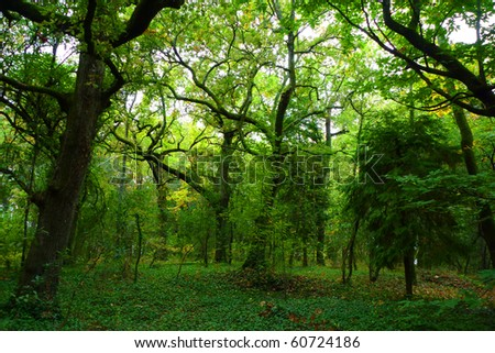 beautiful light in a green and beautiful forest - stock photo