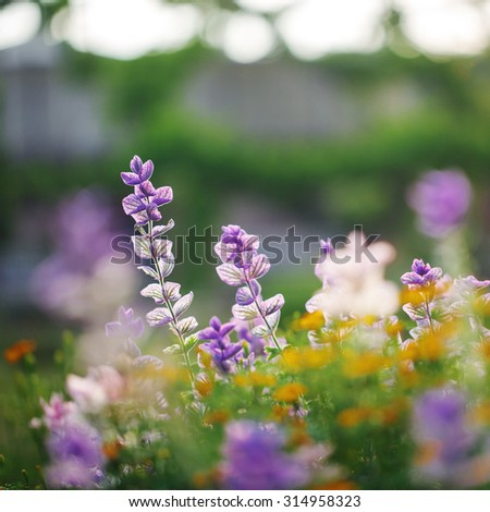 beautiful lilac flowers in city park. Bright colorful flowerbed  - stock photo