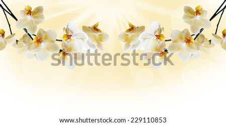 Beautiful lilac orchid flower phalaenopsis with copyspace - stock photo