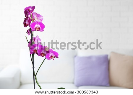 Beautiful lilac orchid in pot on table in room - stock photo