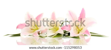 beautiful lily flowers isolated on white - stock photo