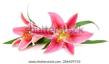 beautiful lily isolated on white background - stock photo
