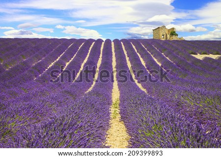 beautiful lines of lavander fields, Provance, France - stock photo