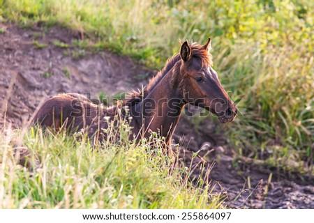 Beautiful little foal in the meadow. - stock photo