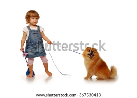 beautiful little girl in the age of two years holding red fluffy pomeranian dog on a leash - stock photo