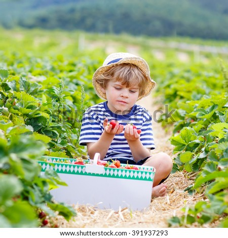 Beautiful little kid boy picking and eating strawberries on organic bio berry farm in summer, child on warm sunny day. Harvest fields in Germany. Healthy food for children. - stock photo