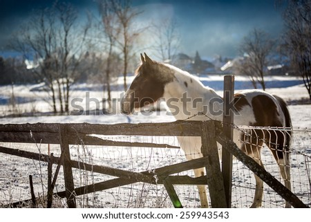 Beautiful lonely horse pasturing on outdoor paddock at winter - stock photo