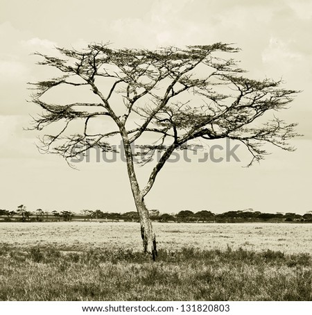 Beautiful lonely tree in Serengeti National Park - Tanzania (stylized retro) - stock photo