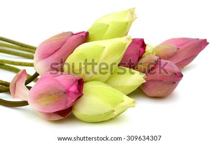 Beautiful lotus flower bouquet isolated on white background - stock photo