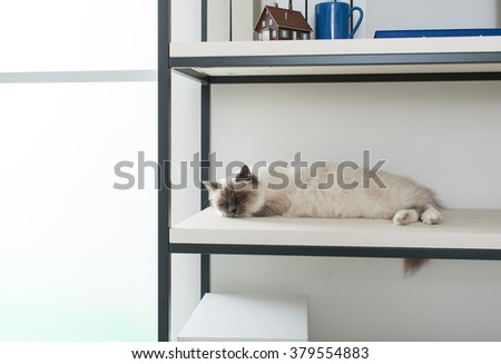 Beautiful lovely cat exploring shelves at home and sleeping on a shelf, pet life concept - stock photo