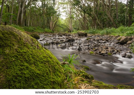 Beautiful lush forest with babbling brook taken with long exposure to smooth out water & give dreamy effect - stock photo