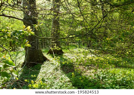 Beautiful lush green forest great spring summer nature background - stock photo