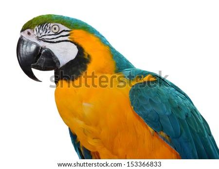 Beautiful Macaw Face - stock photo
