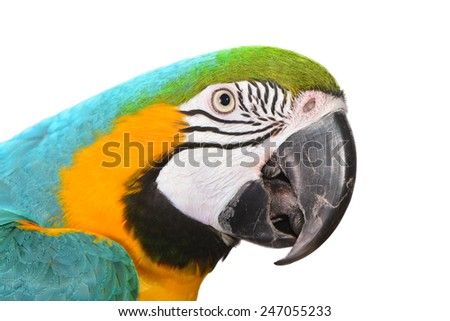 Beautiful Macaw Face isolated on white - stock photo