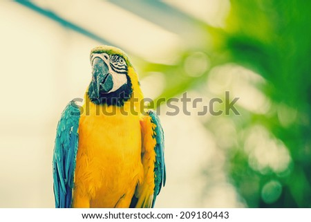 Beautiful macaw parrot in natural environment - stock photo