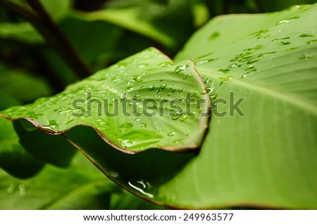 Beautiful macro shot, grean Leaf. - stock photo