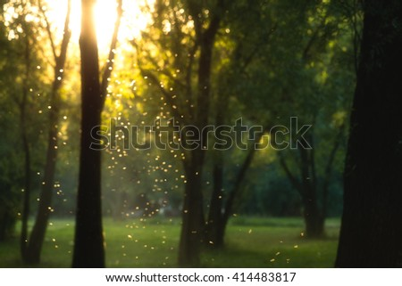 beautiful magical forest at sunset with sunlight and flying particles - stock photo