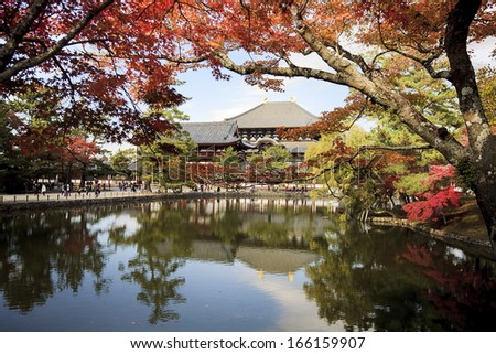 Beautiful maple place - stock photo