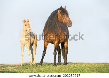 Beautiful mare with a foal standing. - stock photo