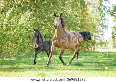 Beautiful mare with foal running on the pasture in summer - stock photo