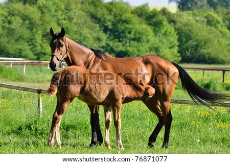 beautiful mare with its foal - stock photo