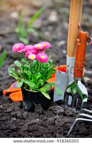 Beautiful marguerite flowers and garden tools - stock photo