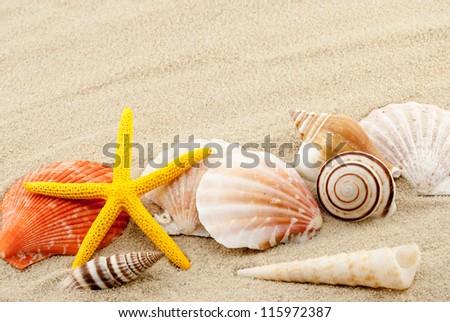 Beautiful marine items on a sand in summer still life theme. - stock photo