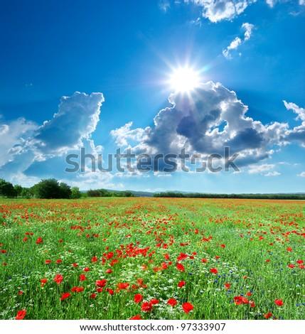 Beautiful meadow. Element of design. - stock photo