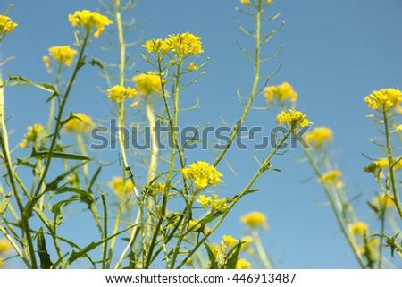 Beautiful meadow flowers on blue sky background - stock photo