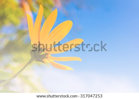 beautiful meadow yellow flower on blue sky background - stock photo