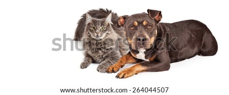 Beautiful mixed breed dog and cat laying together. Image sized to fit a popular social media timeline cover image placeholder. - stock photo