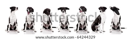 Beautiful mixed breed dog sitting and isolated on white background - stock photo