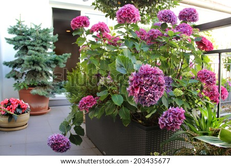 Beautiful modern real estate terrace with a lot of flowers   - stock photo