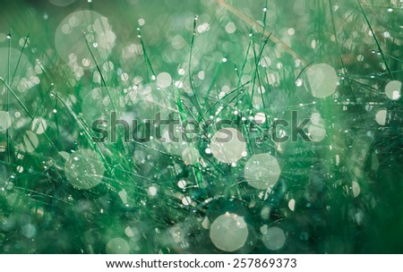 beautiful morning grass with dew droplets - stock photo
