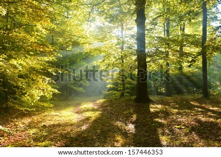 Beautiful morning in autumn forest - stock photo