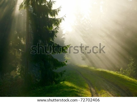 Beautiful morning in the forest - stock photo
