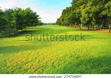 beautiful morning light in public park with green grass field and green fresh tree plant perspective to copy space for multipurpose - stock photo