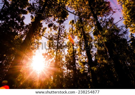 Beautiful Morning Scene in the Forest in Tenerife - stock photo