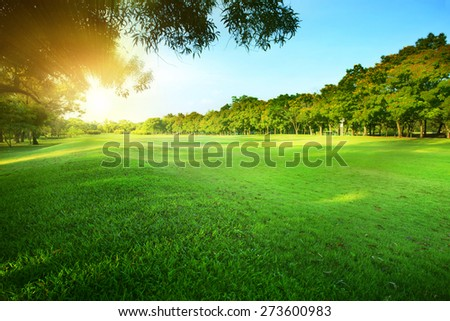 beautiful morning sun light shining  in public park with  grass field and green fresh tree bush use as copy space and natural background,backdrop - stock photo