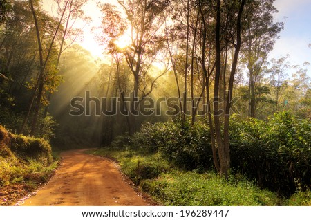 Beautiful morning sunburst in the jungle of Andasibe-Mantadia, Madagascar. HDR - stock photo