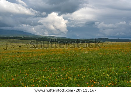 Beautiful mountain landscape with wildflowers in the meadow on a background of mountains, forest and sky with clouds on a cloudy day - stock photo