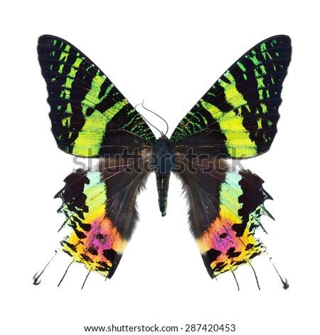 Beautiful multicolored butterfly, Sunset Moth, Urania ripheus (Madagascar) isolated on white background - stock photo