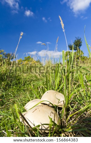 Beautiful mushrooms in grass in autumn time - stock photo