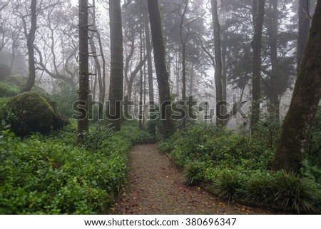 Beautiful / mystical / romantic / fairy forest / park / garden with path, spooky trees, mossy stones and lantern, during foggy day. - stock photo