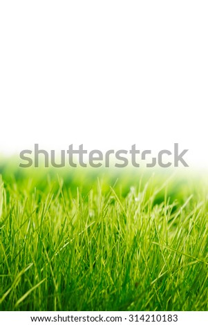 Beautiful natural background with fresh spring grass with white copy space - stock photo