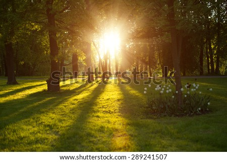 Beautiful nature at evening in spring forest trees with sun rays Concept of sun wonderland Summer scene Landscape in autumn season Sunlight background  Summertime, autumntine sun scene. Backlit. - stock photo