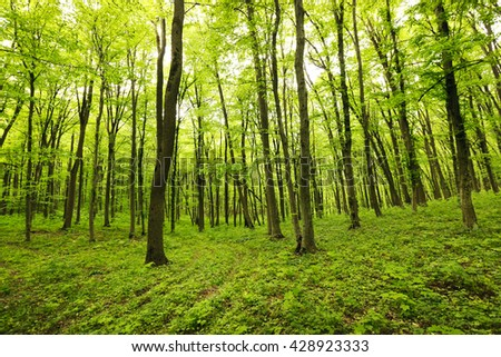 Beautiful nature at morning forest - stock photo