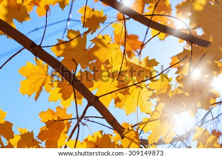 Beautiful nature - autumn leaves and blue sky - stock photo
