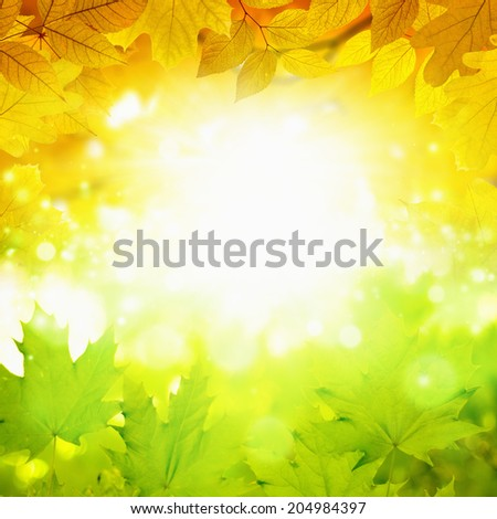 Beautiful nature background - summer turns to autumn, green and yellow leaves, bright light, sun shines through leaves - stock photo