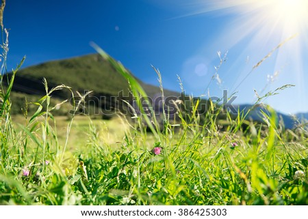 Beautiful nature landscape - Alpine meadow. Grass closeup with sunbeams. Beautiful Nature landscape - stock photo